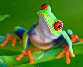 fun facts main frog