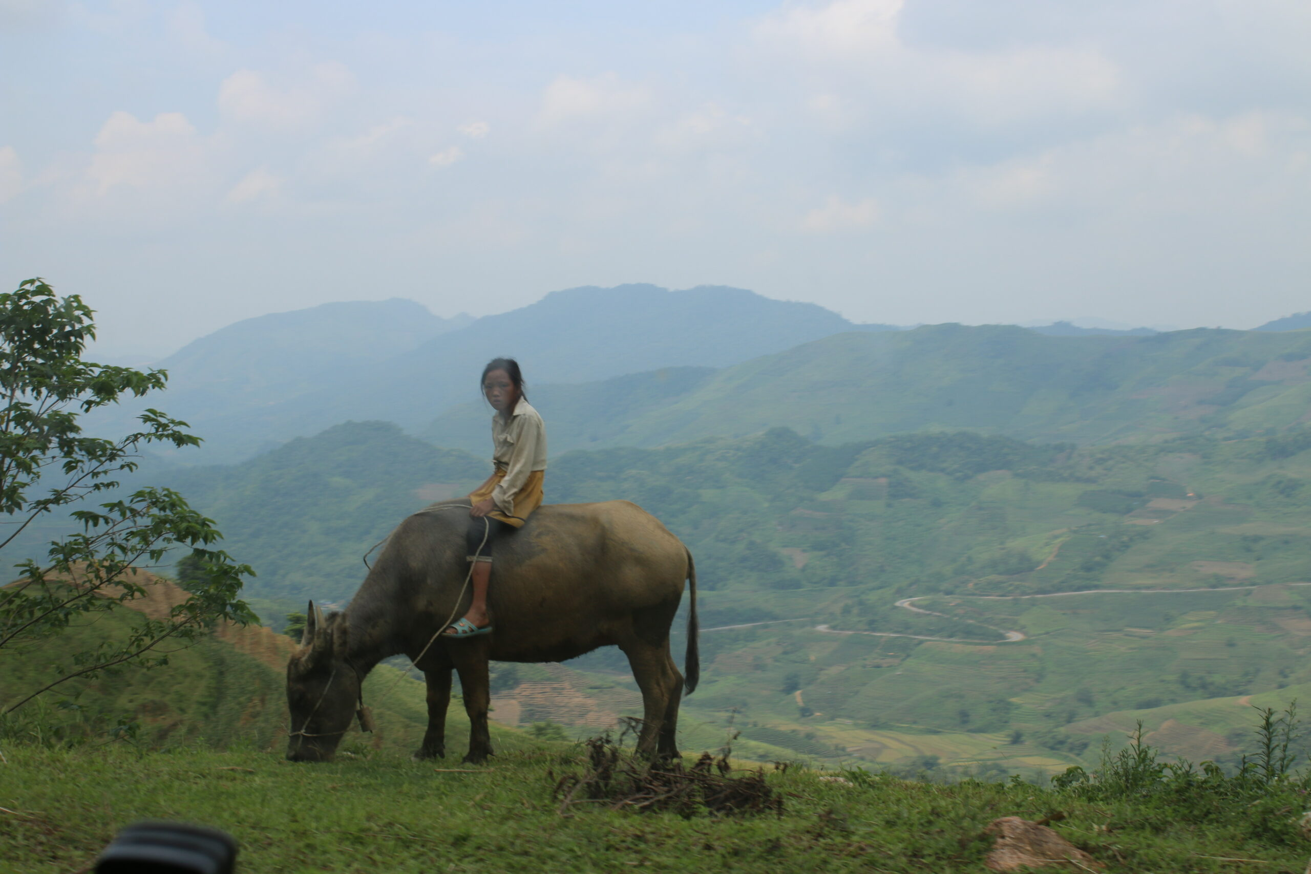 cao-son child on buffalo